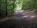 Bushcliff Wood Track - geograph.org.uk - 494130.jpg