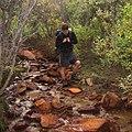 Bushwacking along a mineral-rich streambed (6795746976).jpg