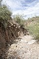 Butcher Jones Trail to Pinter's Point Loop, Tonto National Park, Saguaro Lake, Ft. McDowell, AZ - panoramio (163).jpg