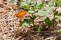 Butterfly (3693450440).jpg