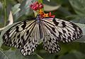 Butterfly 12s (5663028840).jpg