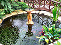Butterfly World Japanese garden 3.jpg