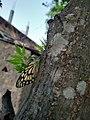 Butterfly trees.jpg
