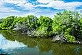 CHIU, CHIH-CHENG 與水共生紅樹林.jpg