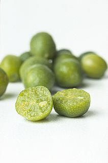 Australian lime variety of lime