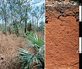 CSIRO ScienceImage 4311 Red Kandosol soil profile in the Darwin district Northern Territory.jpg