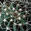 Cactus1002.jpg