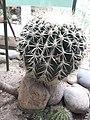 Cactus20180912 120451.jpg