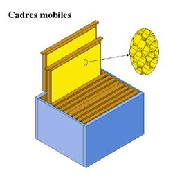 La Ruche dans ABEILLES 250px-Cadres_mobiles6