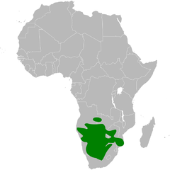 Calendulauda africanoides distribution map.png