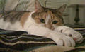 Calico cat with emerald eyes looking at the camera.jpg