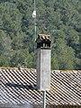 Can Borrell - P1180314.jpg