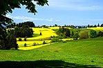 Campo de canola em flores (imagens cênicas do condado de Washington, Oregon) (washDA0035) .jpg