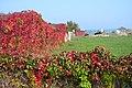 Capanna coperta dalle foglie autunnali - panoramio.jpg