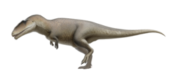Carcharodontosaurus.png