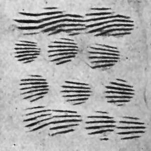 Common cockle - Cockle shell ridges imprinted in fragment of Neolithic Cardial ware