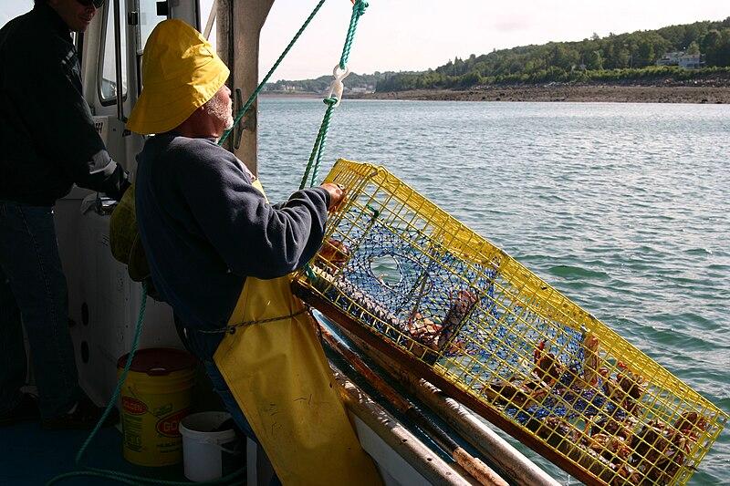 File:Catching crabs.jpg