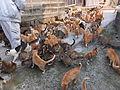 Cats in aoshima island 1.JPG