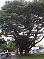 Centro Medico Docente La Trinidad (CMDLT) 2012 031.jpg
