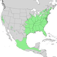 Mapa de extensão de Cephalanthus occidentalis 1.png