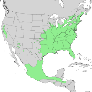 Cephalanthus occidentalis - Image: Cephalanthus occidentalis range map 1