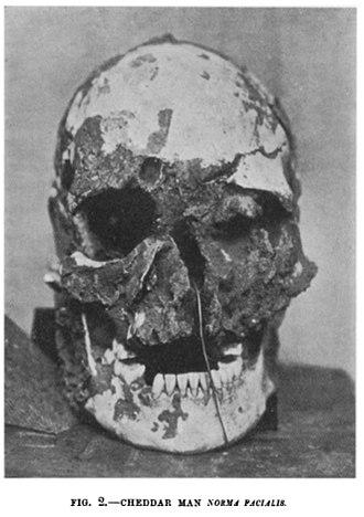 Cheddar Man - Skull of the Cheddar Man