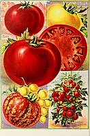 Childs' rare flowers, vegetables, and fruits (1908) (20614034171) .jpg