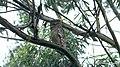 Chinnar Wildlife Sanctuary IMG 9072 (12).JPG