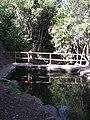 Cipreses (Ranchillo). - panoramio (3).jpg