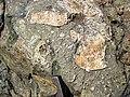Clast-rich impact pseudotachylite (Sudbury Breccia, Paleoproterozoic, 1.85 Ga; Windy Lake Northwest roadcut, Sudbury Impact Structure, Ontario, Canada) 6 (33858898898).jpg