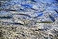 Clear-water-2554800.jpg