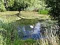 Close to the visitor centre at Paxton Pits - August 2013 - panoramio.jpg