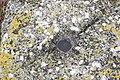 Colonia Ulpia Escus 2010 PD 0075.JPG