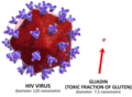Comparative size of gluten vs HIV virus.png