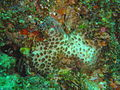 Corals at Island Rock DSC04799.JPG