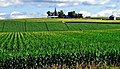 Corn Fields, Iowa Farm 7-13 (15277889101).jpg