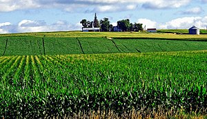 Heartland (United States) - Corn field in Iowa.