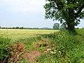 Cornfield by Knightsfield Road - geograph.org.uk - 198902.jpg