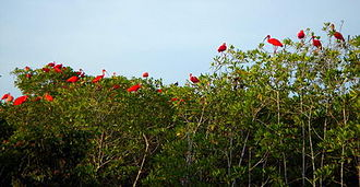 Morrocoy National Park - Corocoro, bird species found in the Morrocoy National Park.