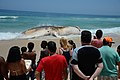 Corpo de baleia encalhada na Praia do Arpoador, no Rio (24568320308).jpg
