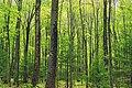 Cranberry Swamp Natural Area (6) (17906796260).jpg
