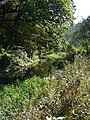 Cromford Canal - geograph.org.uk - 1522410.jpg