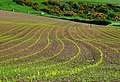 Cropland near Chaldon - geograph.org.uk - 1308100.jpg