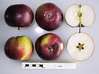 Cross section of Barry, National Fruit Collection (acc. 1958-018).jpg
