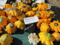 Cucurbita pepo Scallop group - Flying Saucer squashes.jpg