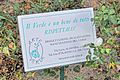 Cupra Marittima 2013 by-RaBoe 129.jpg