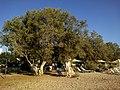 Cyclades Milos Papikinou Plage Taverne O^ Hamos - panoramio.jpg