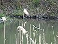 DSC02285 Teich zur Aufzucht autochthoner Fischarten.jpg