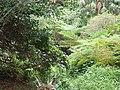 Dark Gully Park P3090020.jpg