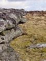 Dartmoor, Devon 2010 (4455638106).jpg